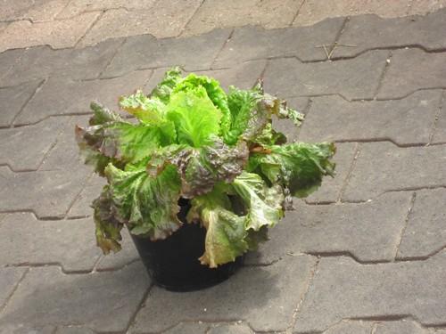 jardinage grenoble aaron dpannage grenoble dans le dpartement de luisre with jardinage grenoble. Black Bedroom Furniture Sets. Home Design Ideas